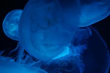 ホームページ制作(ウェブ制作)で考える青色の効果と意味