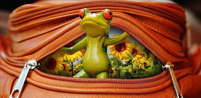 frog-1558590_1280
