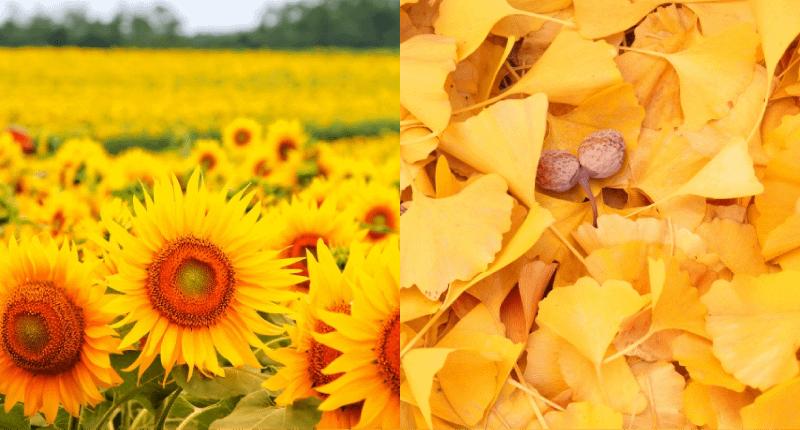 ホームページ制作(ウェブ制作)で考える黄色の効果と意味