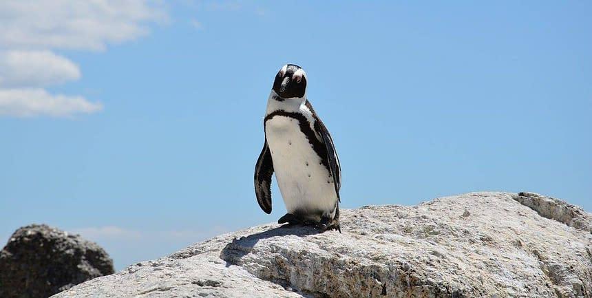 penguin-657527_1280
